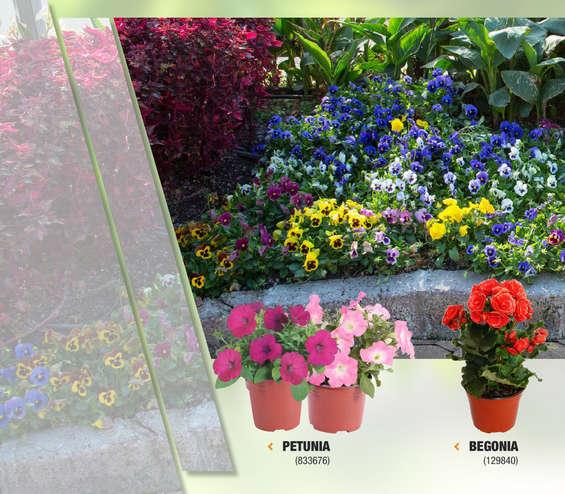 Begonia en ecatepec de morelos cat logos ofertas y for Jardin 7 hermanos ecatepec